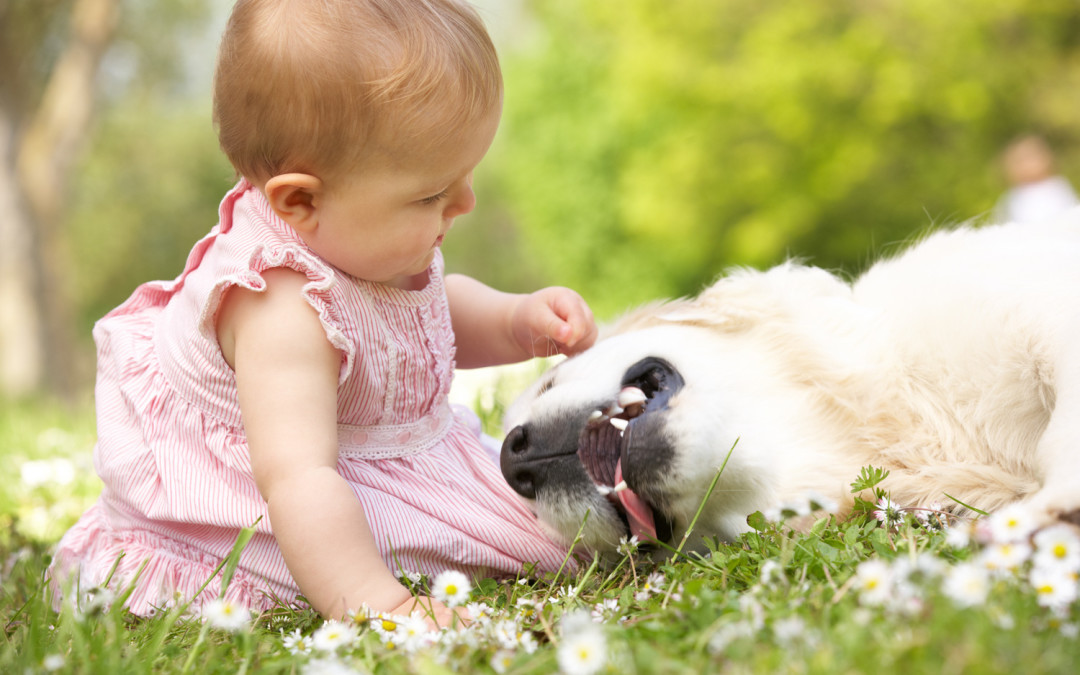 5 Steps To A Childproof Dog