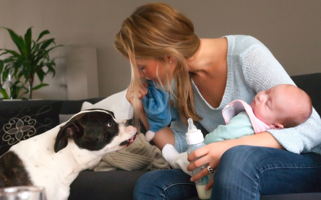 Don't Get Rid Of Your Dog Because A Baby Is On The Way!