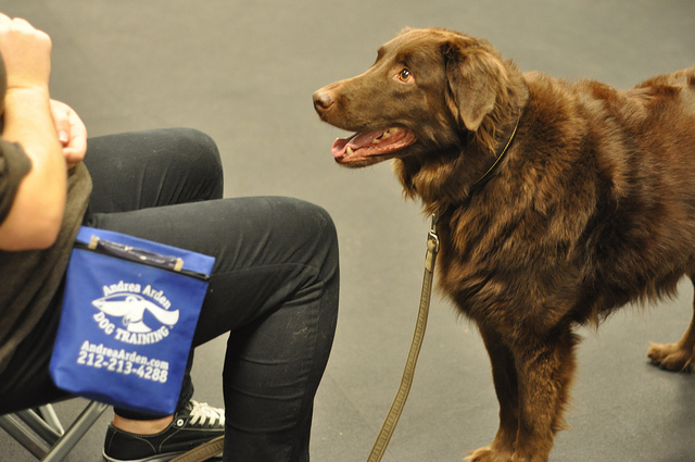 The Yin & Yang of Dog Training: Positive Reinforcement or Aversive Control?