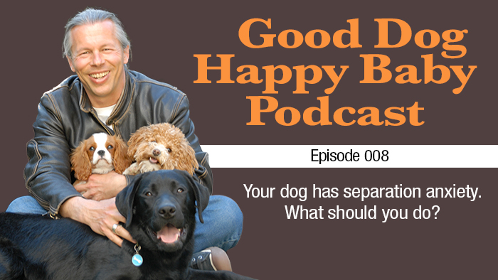 008: What should you do if your dog has separation anxiety?